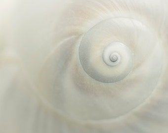 White Seashell Print, Abstract Photography, Nautical Decor,  8 x 10 Print, White Decor,  Seashell Photo