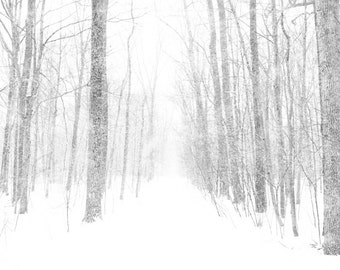Bare trees, forest 8x10 print winter storm, neutrals, minimalist, simple, winter photo, snow, forest, cottage decor, silver, white