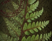 Luxuriant Moss Green Fern with Garnet Centre, Damask Wallpaper Texture Signed Fine Art Photographic Print-Romantic Floral Home Decor