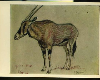Vintage Antelope postcard - African antelope, Orix, A.Komarov vintage postcard