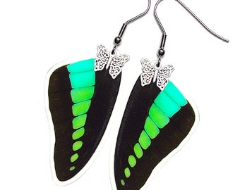 Real Butterfly Wing Earrings (Sarpedon Forewing - E068)