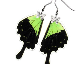 Real Butterfly Wing Earrings (Phorcas Hindwing - E097)