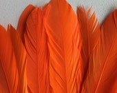 GOOSE COQUILLE FEATHERS ,  Bright Orange  /   403