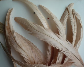 COQUE TAIL FEATHERS  / Beige, Natural / 204