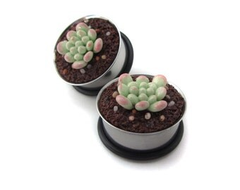 "7/8"" Succulent Plugs - Mint Echeveria"