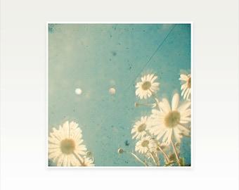Daisy Art print, Floral Wall Art - Daydream