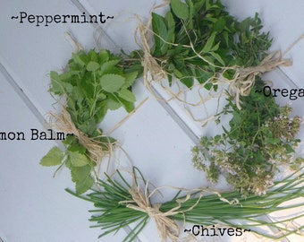 SALE 3 Salad HERB Sampler organic Oregano / Chives / Lemon Balm / Fresh dried harvest / Kitchen Decor Cooking /gift for cook your choice