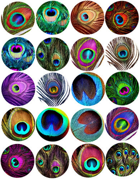 peacock feather patterns clip art collage sheet 2 inch circles digital download graphics images nature printables