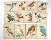 12 Clockwork Bird Postcards - steampunk bird illustrations
