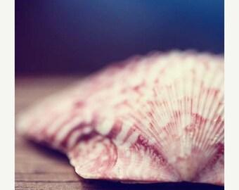 50% OFF Ocean Life Photograph Print - Pink Seashell - Soft White Shell Nautical Deocr navy blue shore pastel indigo navy blue bathroom deco