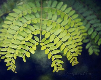 nature photography / fern, green, plant, symmetry, leaf, detail, botanical photography / let it grow / 8x10 fine art photo