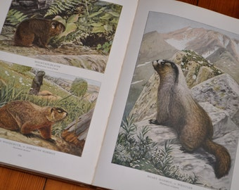 200 Color Plates/Wild Animals of North America/National Geographic Reference Book/First Edition 1918/Naturalists Book with Illustrations