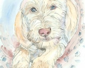 ITALIAN SPINONE Original Watercolor on Ink Print 11X14 Matted Ready to Frame