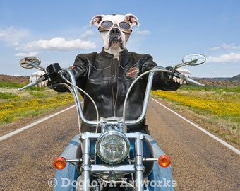 Born to be Wild, large original photograph of white Boxer dog wearing leather jacket and riding Harley-Davidson motorcycle