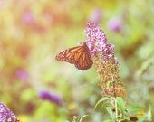 Summer Flutter - Spring Butterfly Floral Garden Nature Home Decor Print
