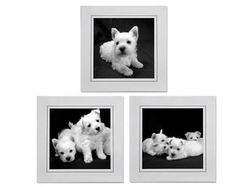 Westies Cards - Set of 3 Westie Puppies Square Black and White Photo Greeting Card Blank Inside - Westie Card Sets - Westie Puppy Cards