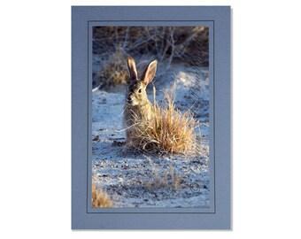 Rabbit Cards - Desert Cottontail Rabbit Card - Bunny Rabbit - Easter Rabbit - Easter Card - Easter Bunny Card - Easter Rabbit Card