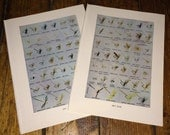 1970 DRY FLIES fly fishing antique original lithograph - lures plugs flies fishing -  set of 2 prints