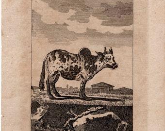 1808 the zebu original antique animal engraving print