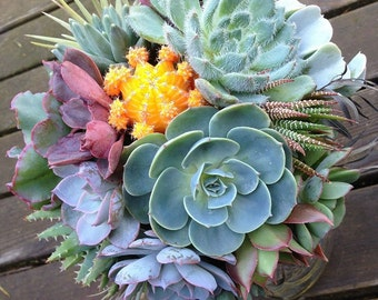 Succulent bouquet with cactus and airplants