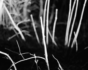 Set of (3) Black and White Nature FIne Art Photographs, Limited Edition Art