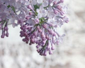Lilac Photograph, purple flower print, Picture of Lilacs, Cottage Chic Lilac Art, Soft Purple Flowers, Nature Photography, 8x12