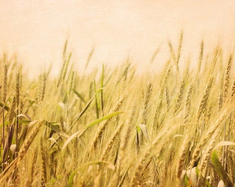 Wild Wheat - 8x12 fine art photo - nature photography, Mediterranean art, Israel travel photography