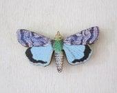 Moth Magnet - Laser Cut Wood Moth Insect Magnet no.5