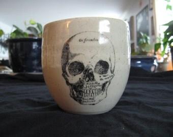 Latin skull mug