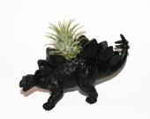 Stegosaurus Dinosaur planter with air plant. Perfect boyfriend gift.