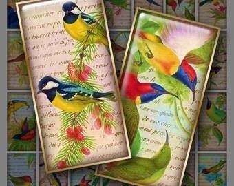 1x2 Digital Bright Birds for Instant Download
