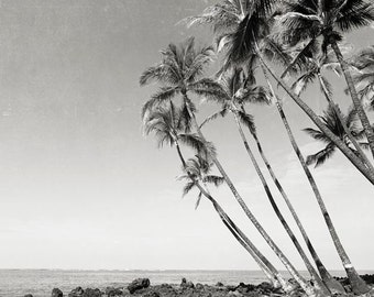 "Palm Tree Photography, Black And White Palm Tree Wall Art, Island, Ocean, Large Palm Tree Wall Art, ""Palm Tree Island"""