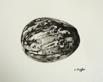 Nutmeg original charcoal drawing, black and white, spice drawing, pencil drawing, food art, kitchen art, still life, nutmeg drawing,