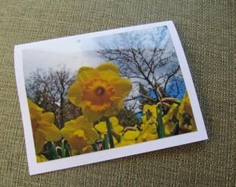 Daffodils Photo card, blank inside, flowers, yellow