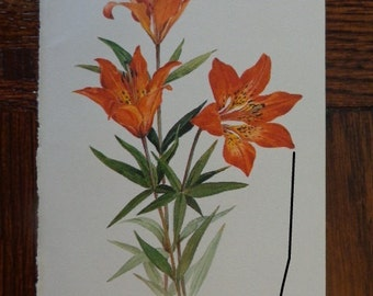 """Original 1968 Wildflower Gems, 4 1/2"""" by 7 1/2"""" Small Rectangular Art Print,WOOD LILY Lovely Matte Cream Paper, More in shop"""