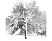 Winter Snow Storm, Maine Winter Wonderland, Snowy Trees,Black&White, White Christmas, Peaceful/Modern/Minimalist Landscape,FREE SHIPPING USA