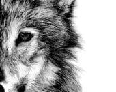 Wolf Fine Art PRINT, Illustration Print, Art Print, Pencil Drawing, Pencil Sketch, Wall Print, Home Decor, Wolf Print, Wolf Drawing Drawings