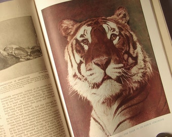Antique 1920's Wonders of Animal Life by Famous Writers on Natural History, vol 2, Hammerton, color plates, bird book, fish book, tigers