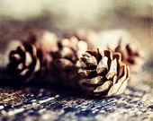 Warm Autumn Decor, Rustic Kitchen Decor, Pinecones, Hemlock, Brown, Beige, Fall Decor, Winter Decor, Pinecone Picture, Nature Photography. - LisaRussoFineArt