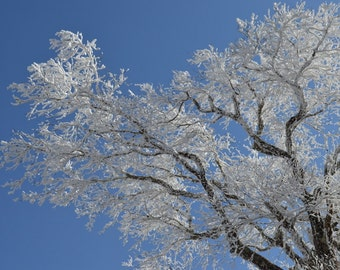 Crystal Afternoon - Photo -  Winter Mountain Photo, snow photo