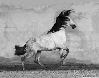 WindStorm - Fine Art Horse Photography - Horse - Black and White - Fine Art Print