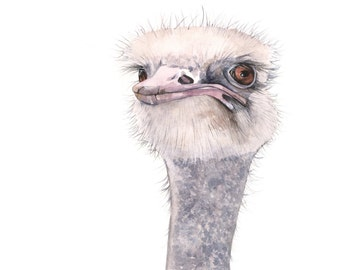 Ostrich watercolor painting O001 Archival print of watercolor painting A4 print wall art print - bird art print