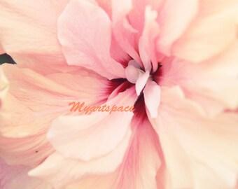 Girl nursery flower print, CLEARANCE SALE Rose Pink soft flower fine art print, Pastel Delicate petals pastel nursery art Rose Quartz art