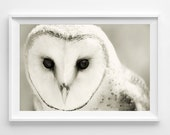 "Barn Owl Photograph Unframed / black white woodland nature home decor / vanilla cream minimal / photography print / ""Whiter Shade of Pale"""