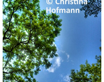 Green Leaves, Blue Sky - instant digital download photograph