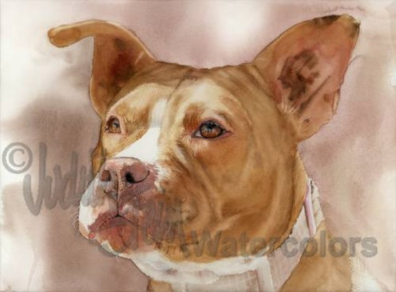"""American Pit bull Terrier, Pittie, Red & White, Pet Portrait Dog Art Watercolor Painting Print, Wall Art, Home Decor, """"America's Sweetheart"""""""
