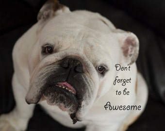 Handsome English Bulldog on a 5 x 7 Inspirational Greeting Card