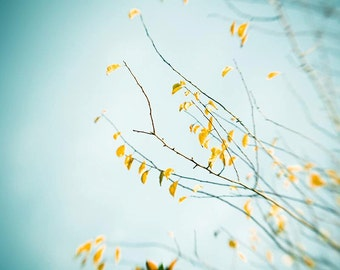 fall leaves photography autumn nature photography botanical 8x10 20x30 fine art photography fall blue sky golden teal aqua autumn decor wall