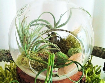 DIY Air plant terrarium kit, Mothers day gift, air plant terrarium, hanging glass globe, terrarium containers, Home and living, Gift