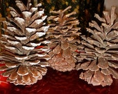 Mystical NAtural  GIANT PINE CONE PRoTECTION FERTIiLitY  Extra Large Wiccan Pagan Altar